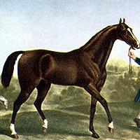 cuento del caballo de guerra