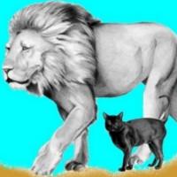 cuento gata y la leona