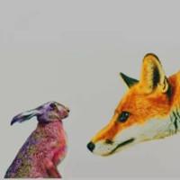 cuento del zorro y la liebre